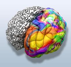 multicoloured brain